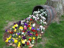 flori gradina 1