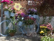 ghivece flori flora