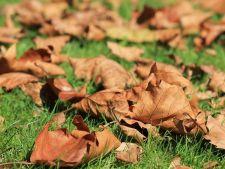 toamna frunze gradina
