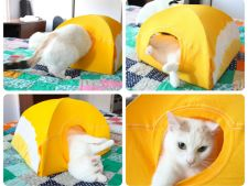 casuta pisica
