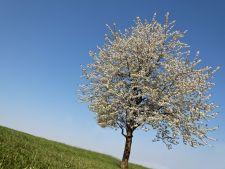 copac Hepta
