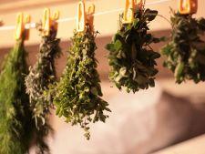 uscare plante aromatice