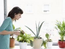 udare plante de apartament