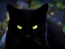 pisica neagra, ghinion