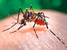 Medicii americani au confirmat! Zika este cauza a microcefaliei