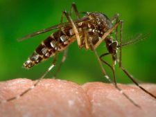 Virusul Zika, transmis pe cale sexuala! Avertizarea MAE