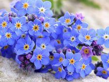 3 flori care adora umbra. Iata cu ce iti poti infrumuseta gradina la inceput de primavara
