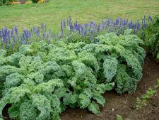 vaza Kale