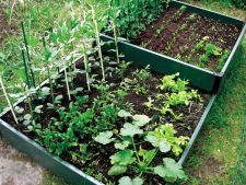 legume plante companion