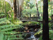 Gradina Botanica Regala din Melbourne