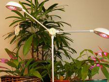 iluminare plante