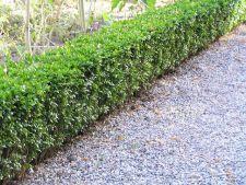 plante gradina