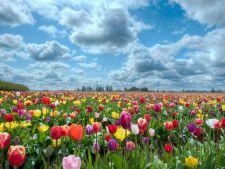 Traditii si obiceiuri de Florii! Ce trebuie sa faci pentru a-ti merge bine
