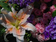 flori gradina mai