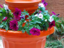 DIY: Cum sa construiesti un bazin pentru pasarile din gradina, inconjurat de flori