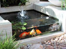 3 idei de iazuri si acvarii pentru o gradina mai racoroasa