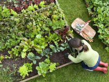 Calendarul gradinarului pentru luna iulie! Ce trebuie sa faci luna acesta in gradina!