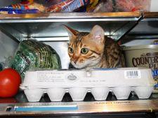 5 modalitati simple pentru a racori pisica in zilele caniculare