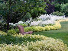 iarba ornamentala