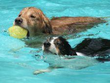 caini piscina