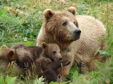 Vacanta in Retezat? Autoritatile avertiveaza: ursii, un pericol pentru turisti