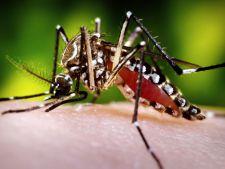 Inca un caz de infectare cu Zika, in Romania