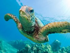 Pasionat de scufundari? 3 animale alaturi de care poti inota in vacantele tale