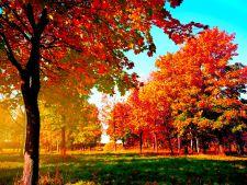 Trei arbori ornamentali, perfecti pentru o gradina de toamna