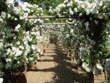 Expertul Acasa.ro, Viaceslav Buhna: Spectacolul paravanelor de flori la tine in gradina