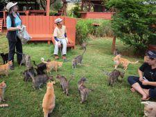 Lanai – Sanctuarul pisicilor din Hawaii! Destinatia perfecta pentru iubitorii de pisici