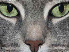 Mister elucidat! S-a descoperit motivul pentru care pisicile au pupilele verticale