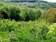 Cultivarea pomilor fructiferi! Sfaturi pentru incepatori