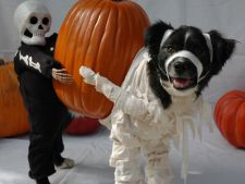 animale halloween