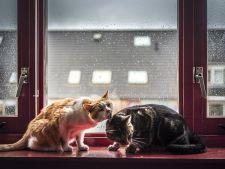 pisici romantice