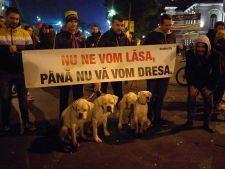 manifestatii