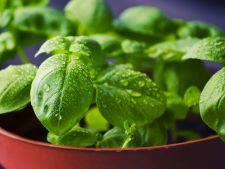 3 plante, mai putin obisnuite, care atrag norocul si prosperitatea