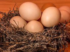 Cum verifici daca ouale pe care urmeaza sa le vopsesti de Paste sunt proaspete