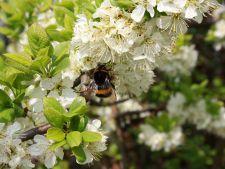 Cum va fi vremea de Florii, Paste si de 1 Mai
