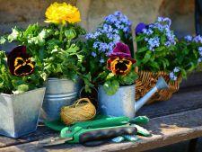 3 secrete ale unei gradini de vis. Cum sa cresti plante perfecte!