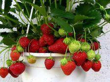 Fructe  in ghiveci