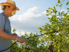 stropire pomi fructiferi
