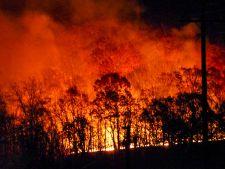 Portugalia, in flacari! Bilantul incendiului devastator: 63 de morti si 70 de raniti VIDEO