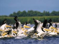 SAIL AWAY - Descopera Marea Neagra si Delta Dunarii! Alege un sejur de 3 nopti cazare la Hotel IAKI si Croaziera de 1 zi in Delta Dunarii