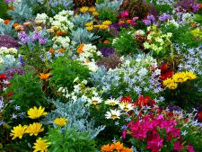 flori rezistente la seceta