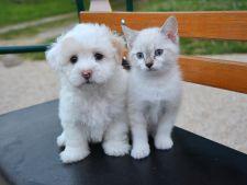 Puricii la caini si pisici! Cum scapi de acestia cu solutii naturale