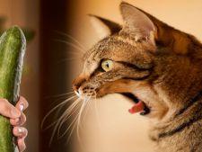 Pisici versus castraveti