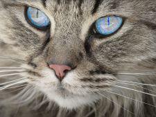 Ai visat o pisica? Ce semnificatie are visul tau