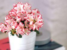 Sucul acidulat, efecte miraculoase pentru plantele de apartament! De ce trebuie sa-l folosesti si tu