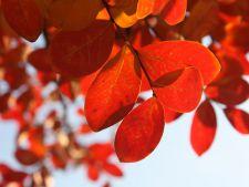 Vreme de primavara in octombrie. Cat mai tine vremea buna
