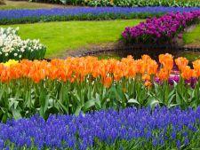 flori cu bulbi primavara